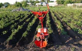 Как пахать мотокультиватором (культиватором): работать, правильно пользоваться, завести после зимы, окучивать картошку, ручным, культивировать землю, выбрать, копать
