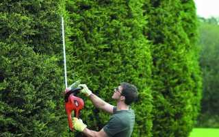 Электрический кусторез: какой выбрать? Особенности телескопического садового кустореза. Рейтинг лучших моделей и отзывы владельцев