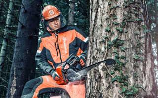 Как спилить дерево бензопилой – подготовка и пошаговый порядок действий