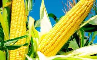 Посев и уход за кукурузой